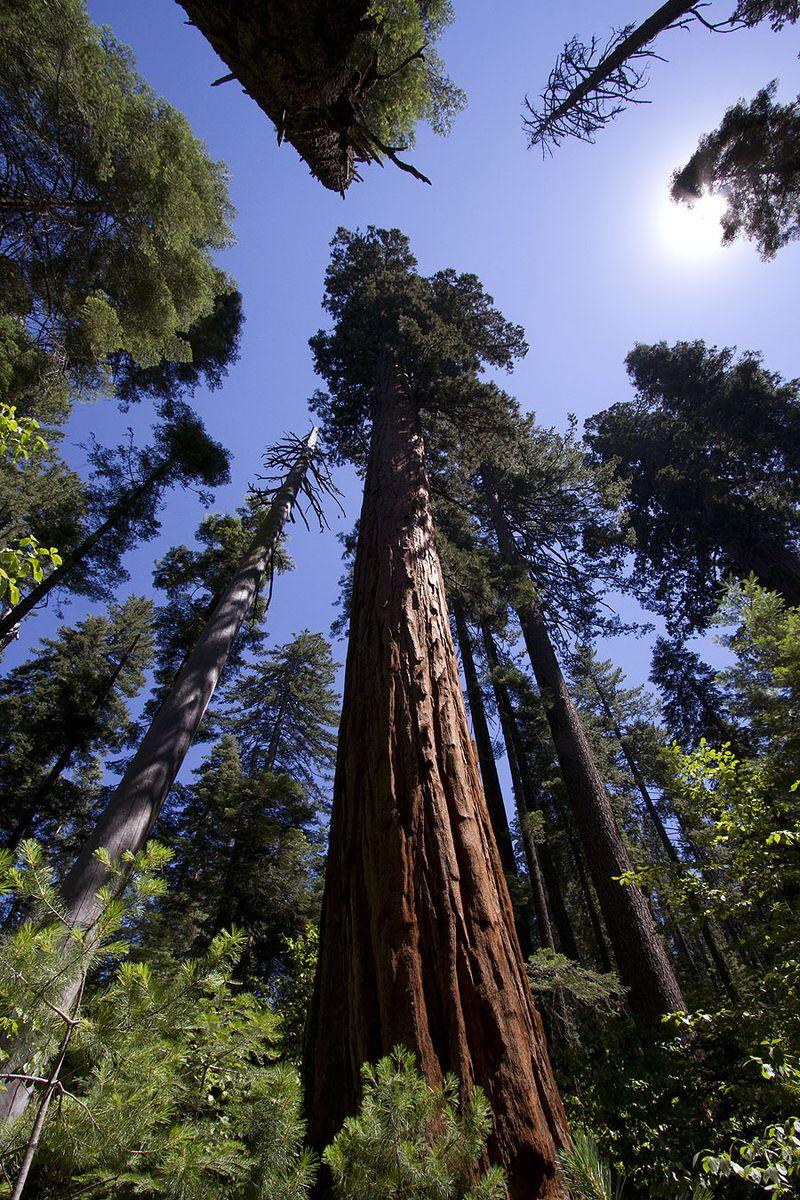 California Bog Trees, img_1064